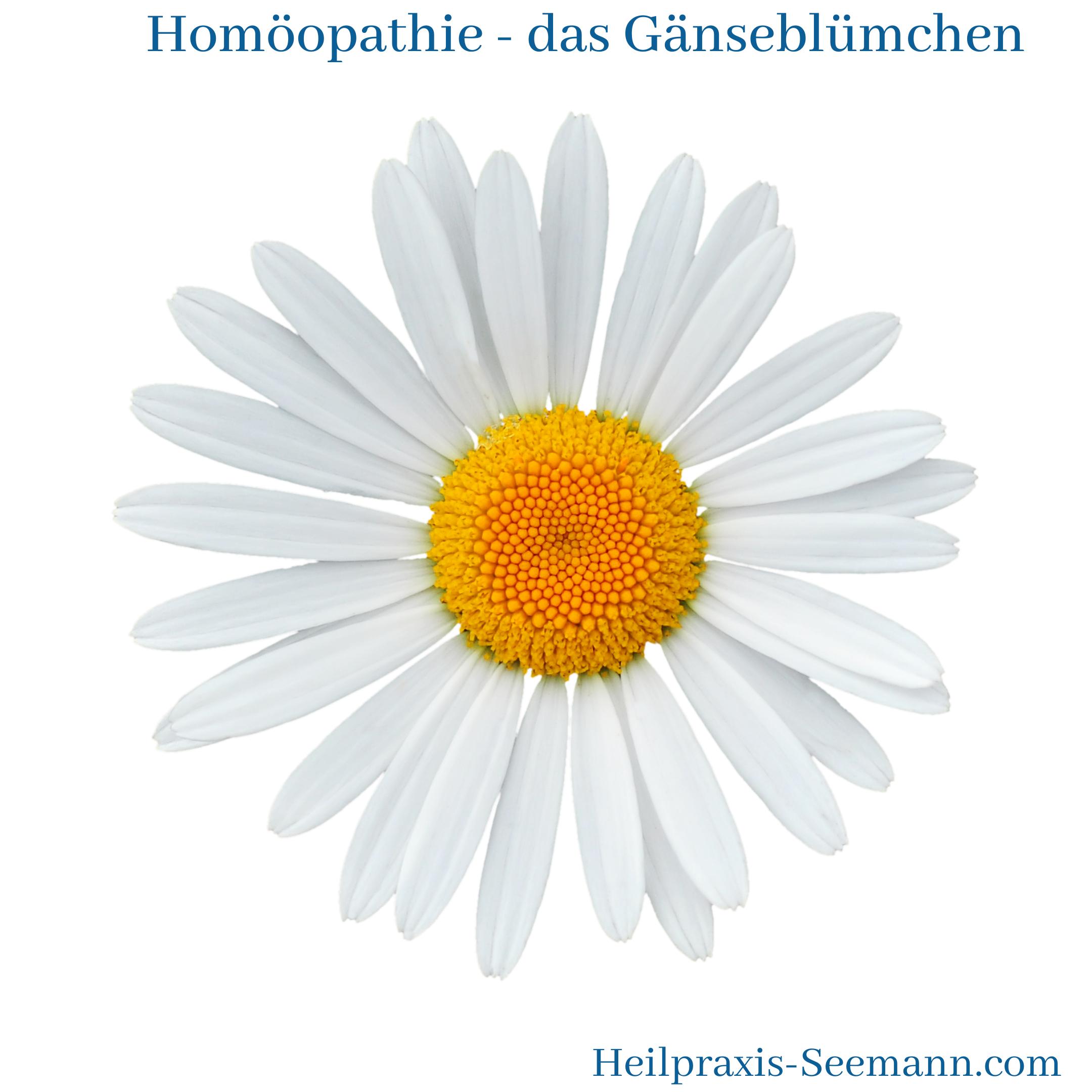 Homöopathie - Gänseblümchen