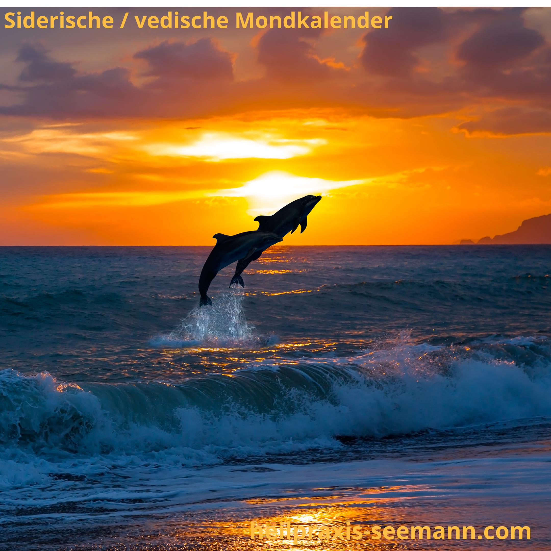 Siderische Mondkalender delfin